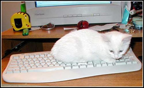Котка на клавиатурата